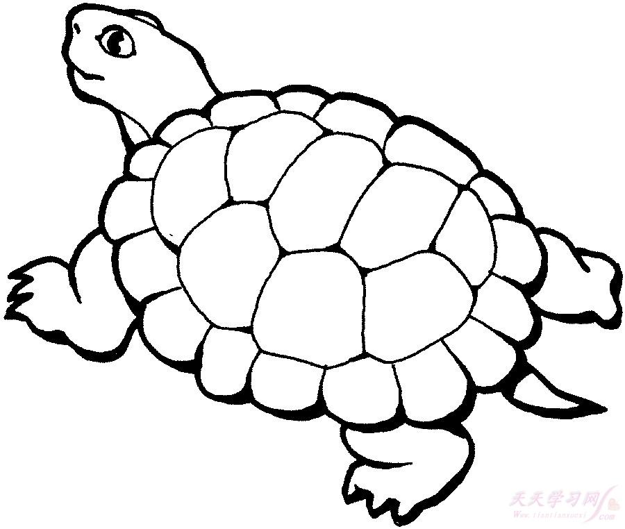 我家有一只非常可爱的小乌龟.它长着三角形的头,一双小眼睛里透出黑