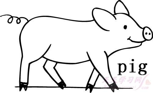 两只猪睡觉的照片套路-小猪卡通图片简笔画